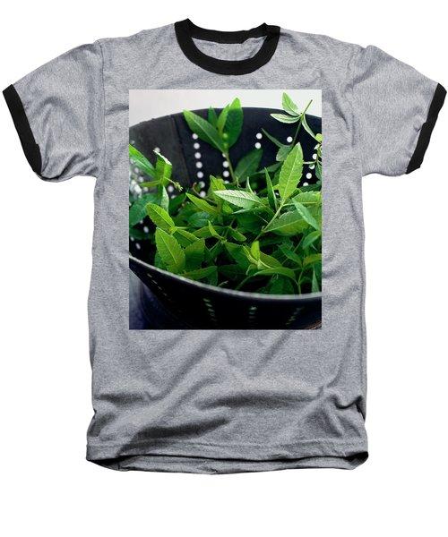 Lemon Verbena Herbs Baseball T-Shirt
