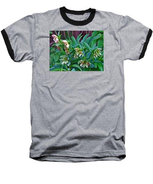 Lenten Roses Baseball T-Shirt
