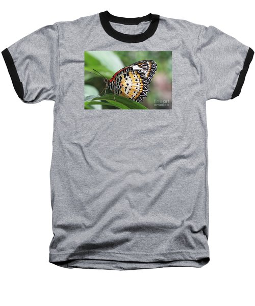 Leopard Lacewing Butterfly Baseball T-Shirt by Judy Whitton