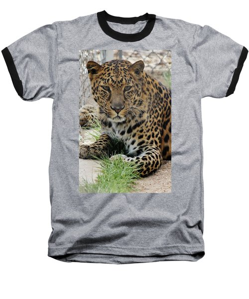 Leopard Lounging 1 Baseball T-Shirt by Diane Alexander