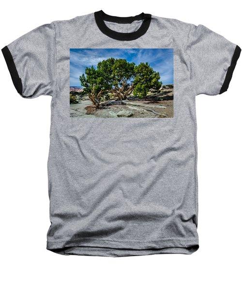 Limber Pine Baseball T-Shirt