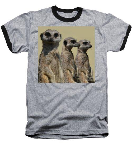 Line Dancing Meerkats Baseball T-Shirt by Paul Davenport
