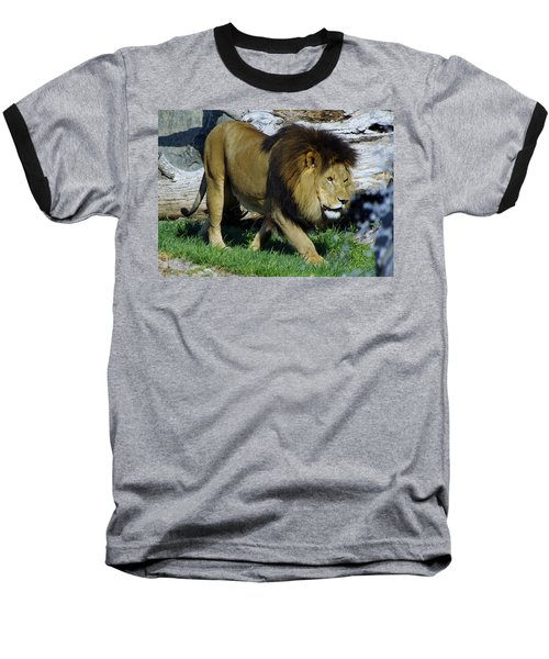 Lion 1 Baseball T-Shirt
