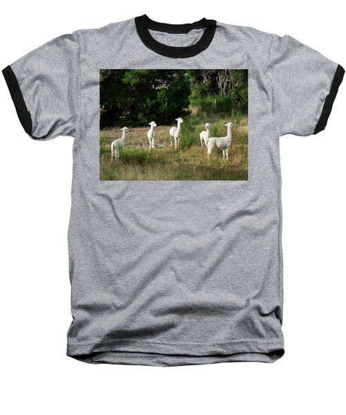 Llamas Standing In A Forest Baseball T-Shirt by Panoramic Images