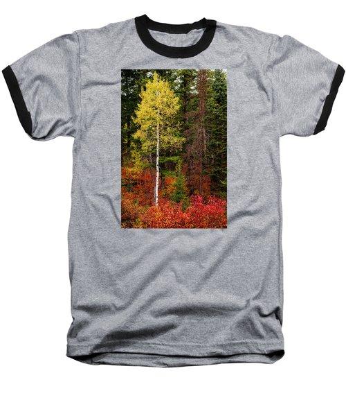 Lone Aspen In Fall Baseball T-Shirt by Chad Dutson