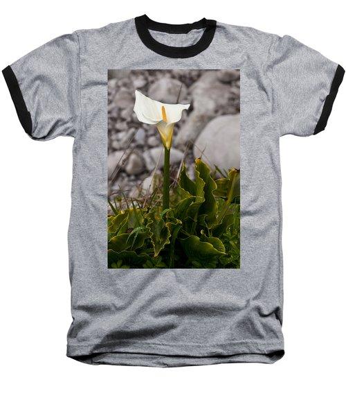 Lone Calla Lily Baseball T-Shirt by Melinda Ledsome