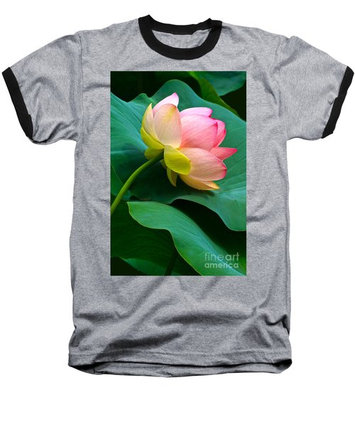 Lotus Blossom And Leaves Baseball T-Shirt by Byron Varvarigos