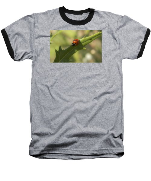 Lovely Lady Bug Baseball T-Shirt by Shelly Gunderson
