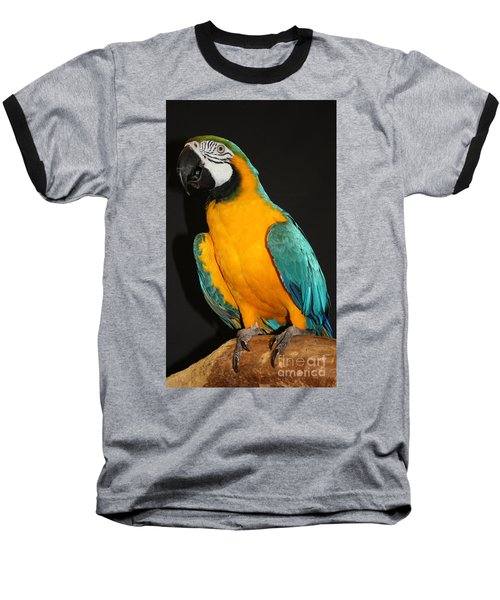 Macaw Hanging Out Baseball T-Shirt