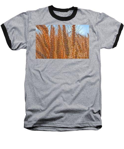 Macro Of Wheat Art Prints Baseball T-Shirt by Valerie Garner