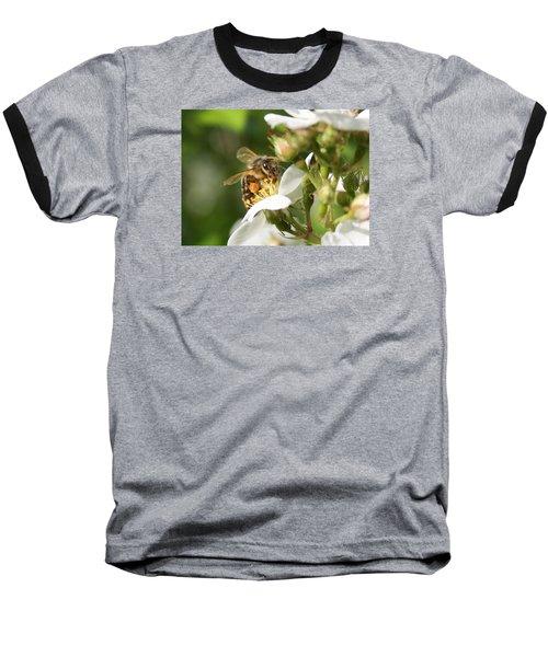 Mad Honeybee Baseball T-Shirt by Lucinda VanVleck