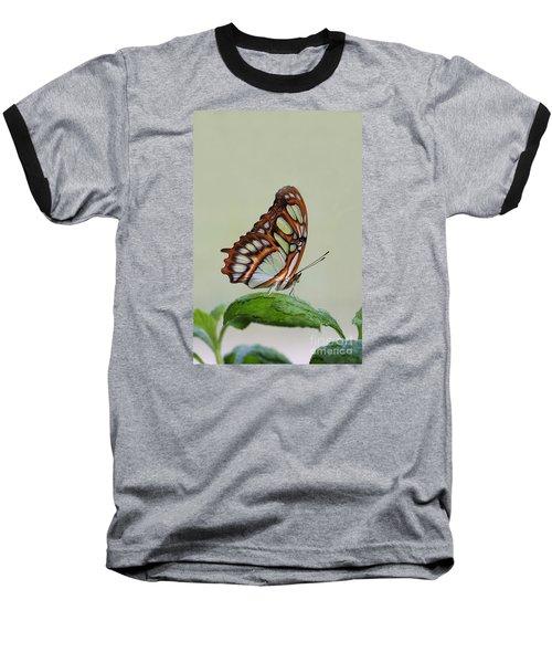 Baseball T-Shirt featuring the photograph Malachite Butterfly #5 by Judy Whitton