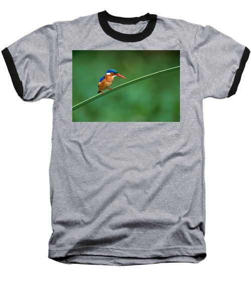 Malachite Kingfisher Tanzania Africa Baseball T-Shirt by Panoramic Images