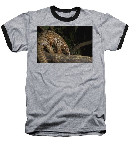 Malayan Pangolin Eating Ants Vietnam Baseball T-Shirt by Suzi Eszterhas