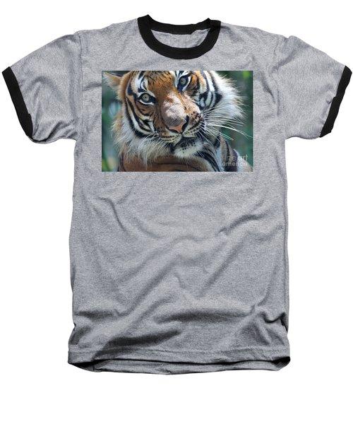 Malayan Tiger Baseball T-Shirt