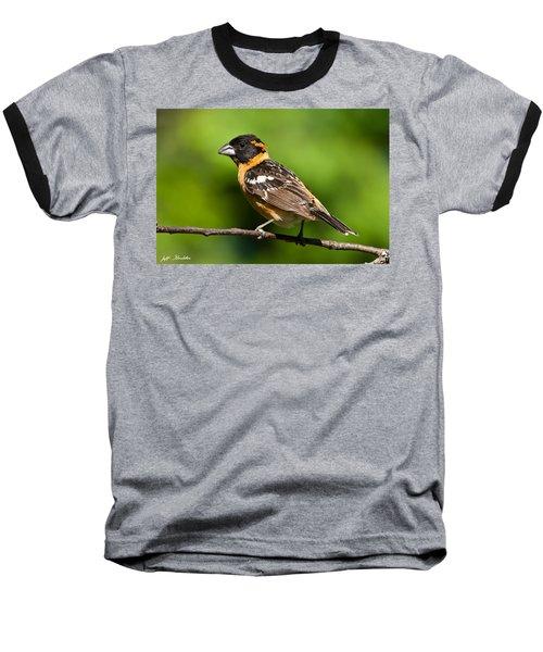 Male Black Headed Grosbeak In A Tree Baseball T-Shirt by Jeff Goulden