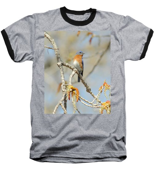 Male Bluebird In Budding Tree Baseball T-Shirt