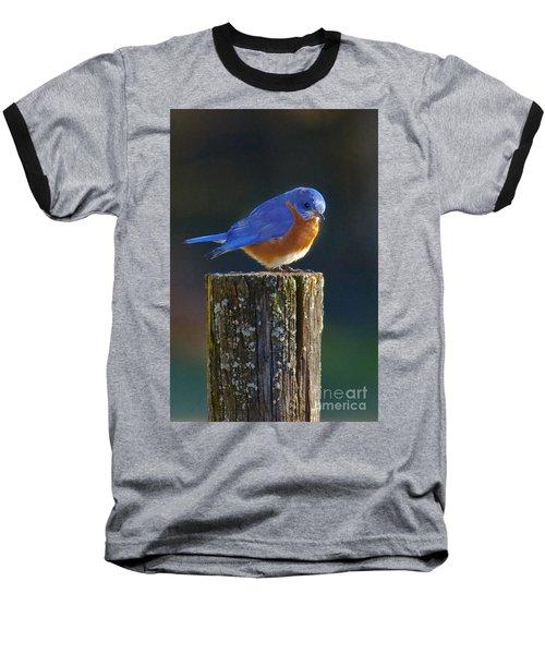 Male Bluebird Baseball T-Shirt by Ronald Lutz