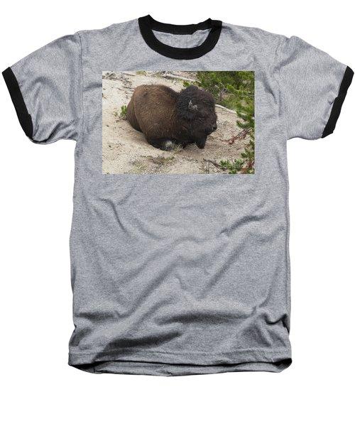 Baseball T-Shirt featuring the photograph Male Buffalo At Hot Springs by Belinda Greb