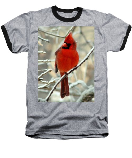 Baseball T-Shirt featuring the photograph Male Cardinal  by Janette Boyd