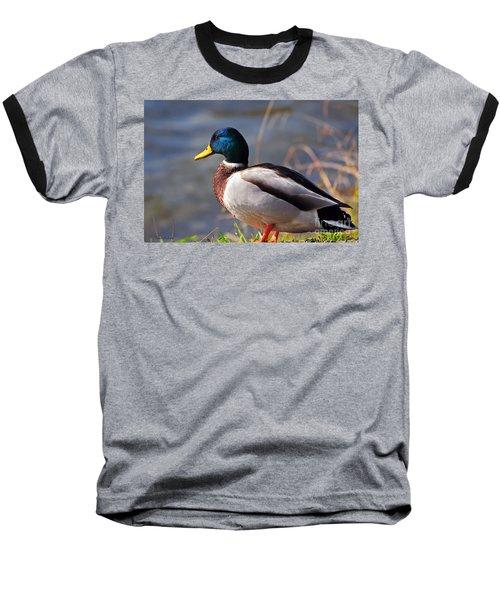 Male Mallard Duck Baseball T-Shirt