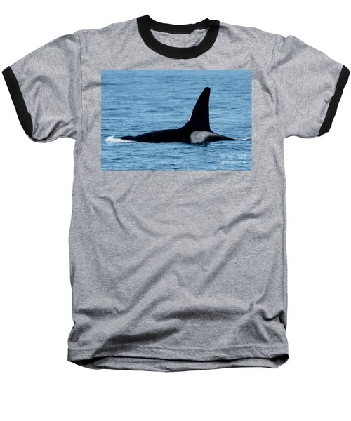 Baseball T-Shirt featuring the photograph Male Orca Killer Whale In Monterey Bay 2013 by California Views Mr Pat Hathaway Archives
