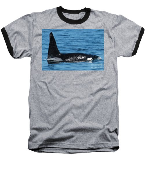 Baseball T-Shirt featuring the photograph Lonesome George Ca165  Male Orca Killer Whale In Monterey Bay California 2013 by California Views Mr Pat Hathaway Archives