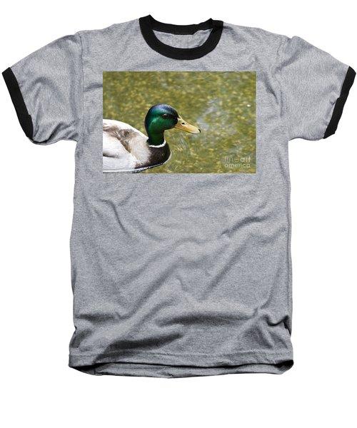 Mallard Duck Closeup Baseball T-Shirt by David Millenheft