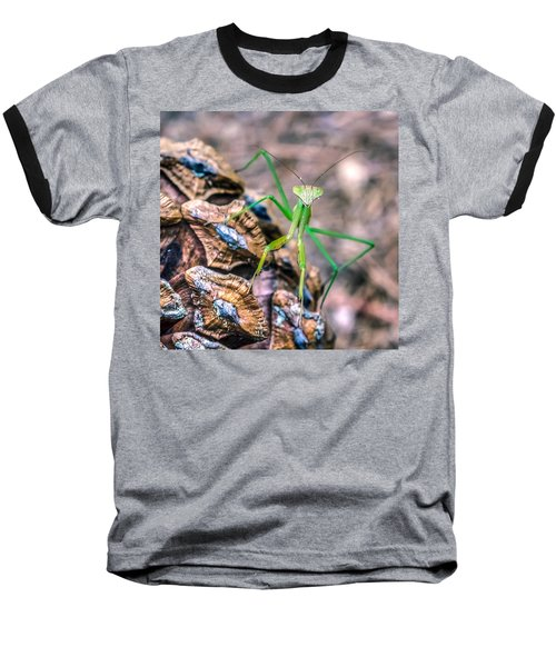 Mantis On A Pine Cone Baseball T-Shirt by Rob Sellers