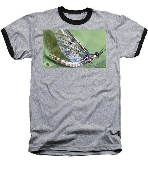 Mayfly Baseball T-Shirt by Richard Thomas