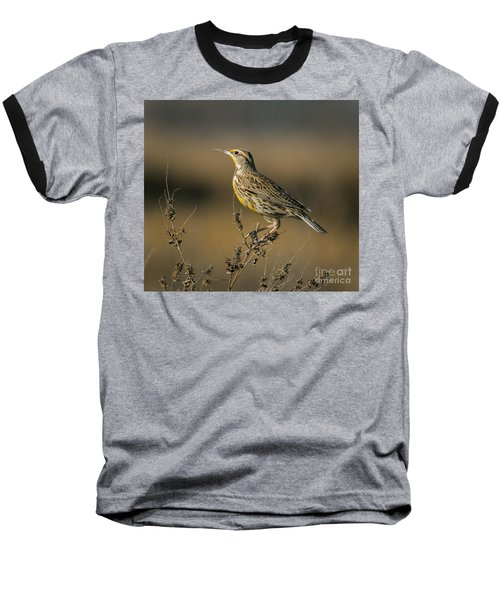 Meadowlark On Weed Baseball T-Shirt by Robert Frederick