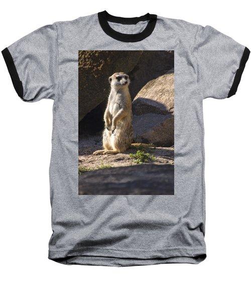 Meerkat Looking Left Baseball T-Shirt by Chris Flees