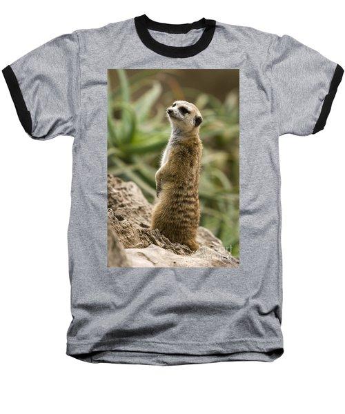 Meerkat Mongoose Portrait Baseball T-Shirt by David Millenheft
