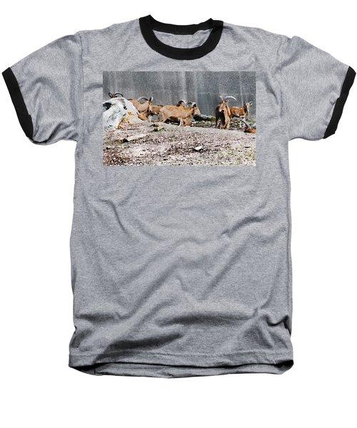 Meeting Of Barbary Sheep Baseball T-Shirt