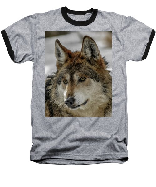 Mexican Grey Wolf Upclose Baseball T-Shirt