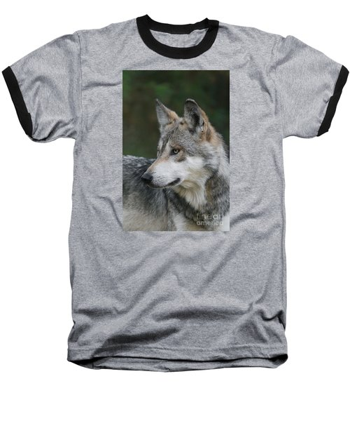 Mexican Wolf #6 Baseball T-Shirt by Judy Whitton