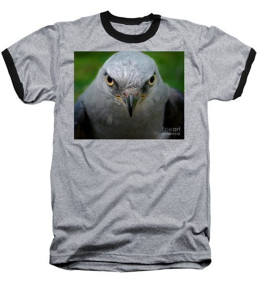 Mississippi Kite Stare Baseball T-Shirt by Liz Masoner