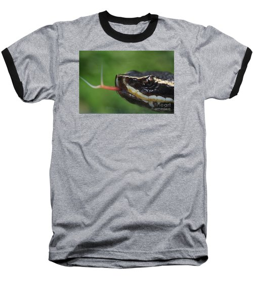 Moccasin Snake Baseball T-Shirt by Rudi Prott