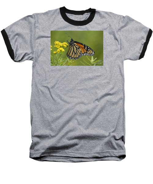 Baseball T-Shirt featuring the photograph Monarch 2014 by Randy Bodkins