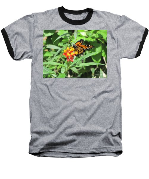 Monarch At Rest Baseball T-Shirt