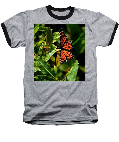 Viceroy Butterfly II Baseball T-Shirt
