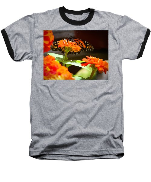 Baseball T-Shirt featuring the photograph Monarch Butterfly II by Patrice Zinck