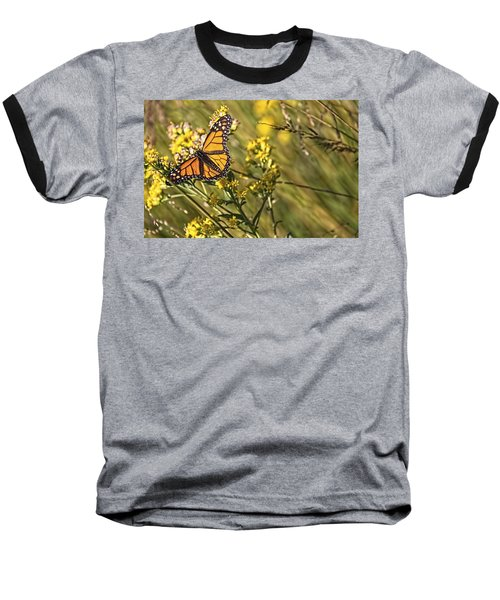 Monarch Hatch Baseball T-Shirt by Daniel Sheldon