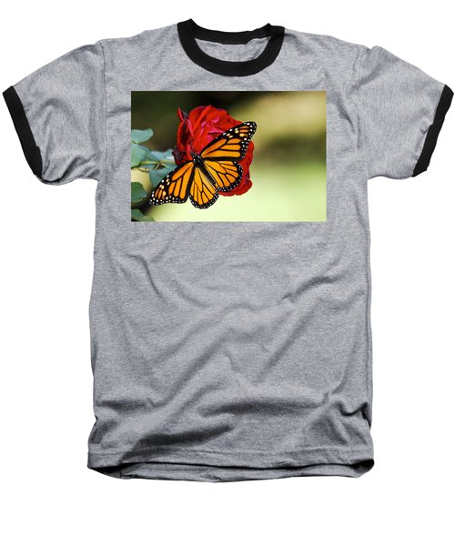 Monarch On Rose Baseball T-Shirt by Debbie Karnes