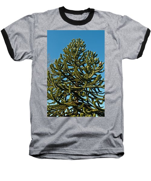 Monkey Puzzle Tree E Baseball T-Shirt by Tikvah's Hope