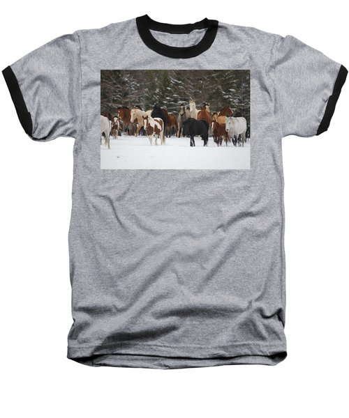Montana Herd Baseball T-Shirt