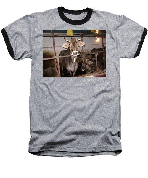 Mooooo Baseball T-Shirt