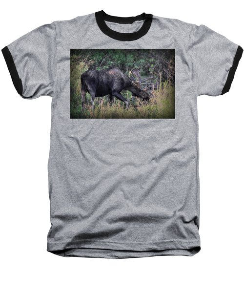 Moose In The Meadow Baseball T-Shirt