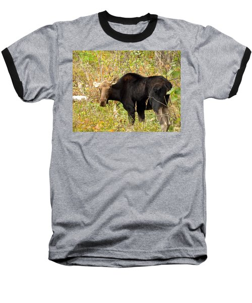 Baseball T-Shirt featuring the photograph Moose by James Peterson