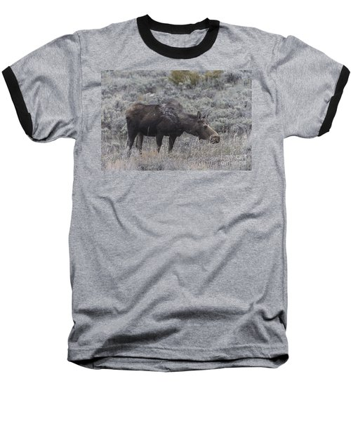 A Grazing Moose Baseball T-Shirt